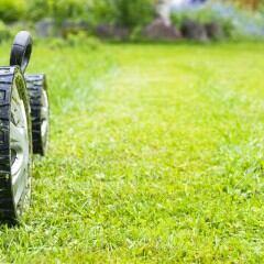 Es gibt auch Rasenmäher mit integriertem Vertikutierer für die Pflege des Rasens