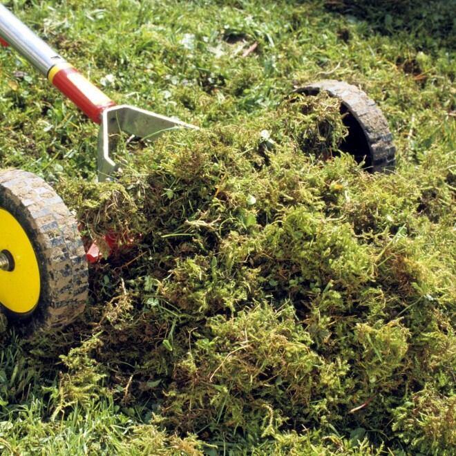 Vertikutieren eines Rasens