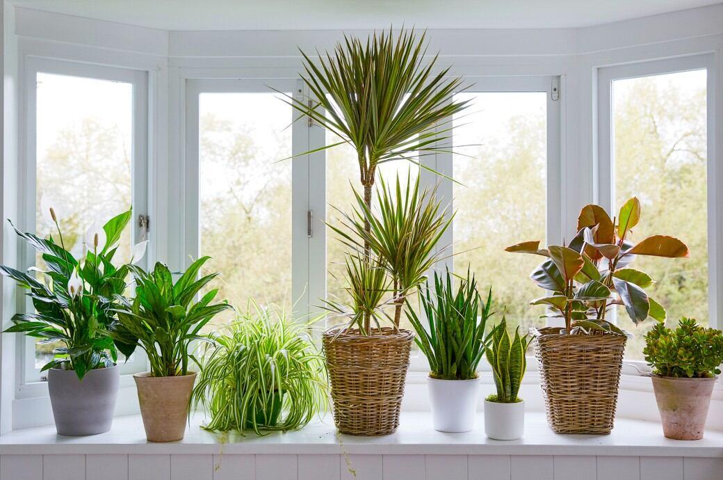 11 besonders pflegeleichte Zimmerpflanzen - myHOMEBOOK