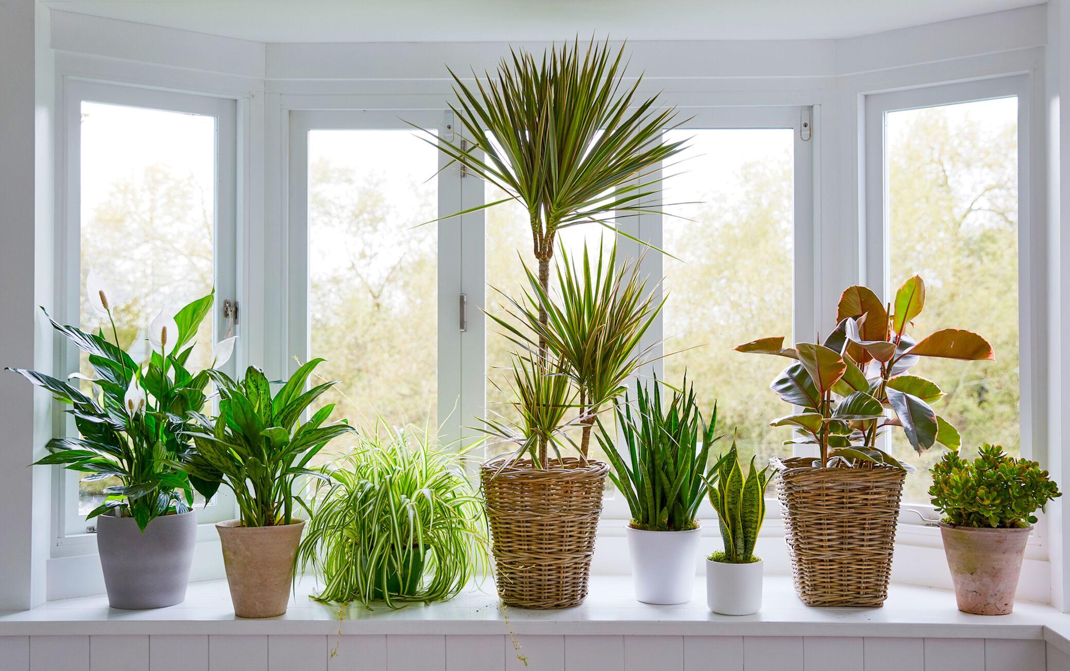 16 pflegeleichte Zimmerpflanzen für Ihre Wohnung
