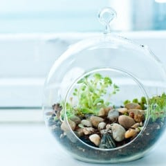 Pflanzen im Glas