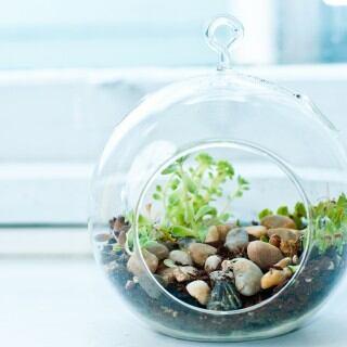 Pflanzen im Glas – Flaschengarten