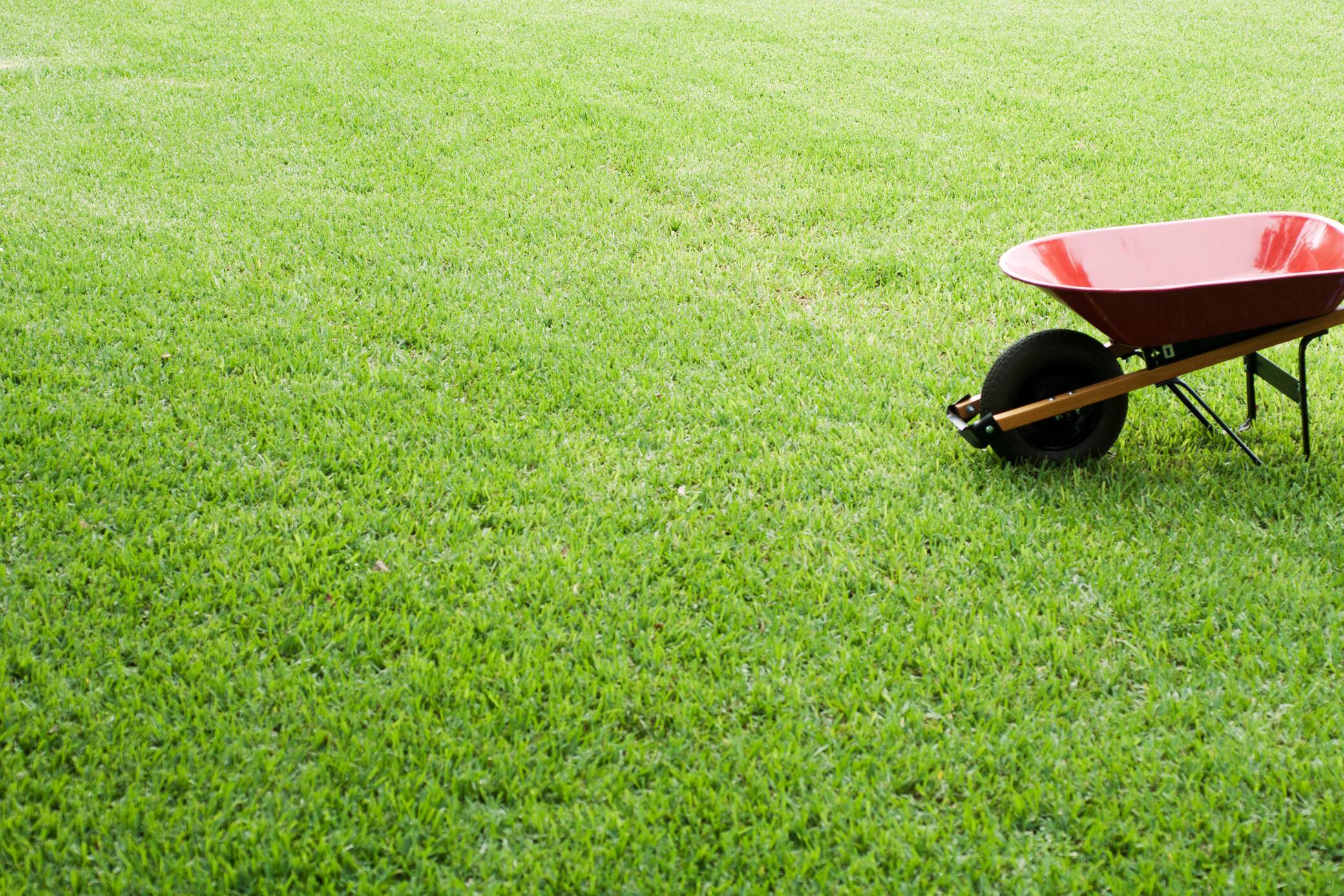 Mit diesen Tipps kalken Sie Ihren Rasen richtig