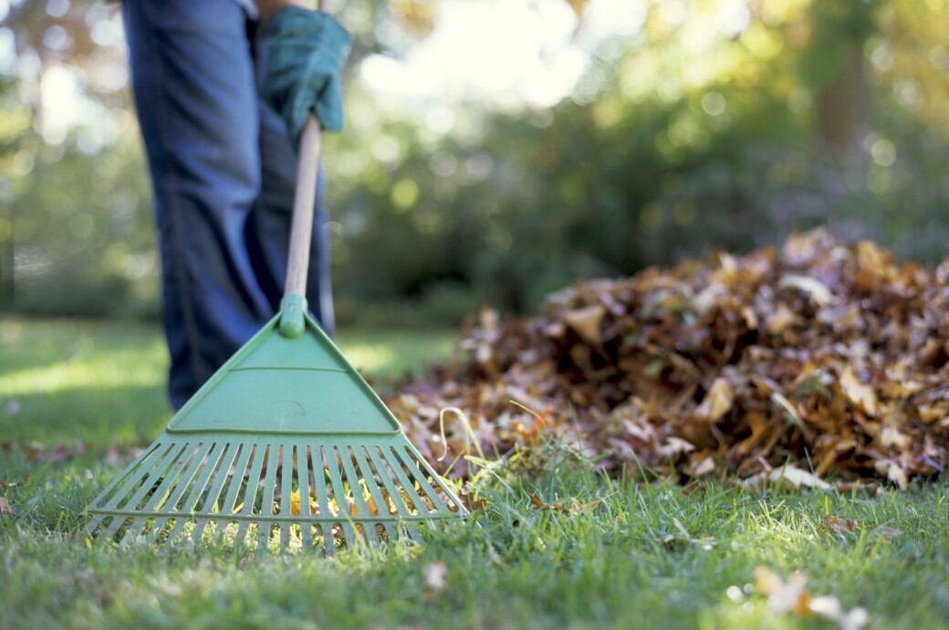 Gemeinsame Rasen im Herbst: So pflegen Sie ihn richtig - myHOMEBOOK &NR_44