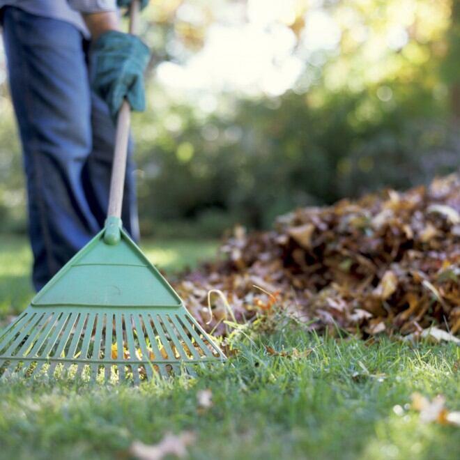 Hobby-Gärtner sammelt Laub vom Rasen ein