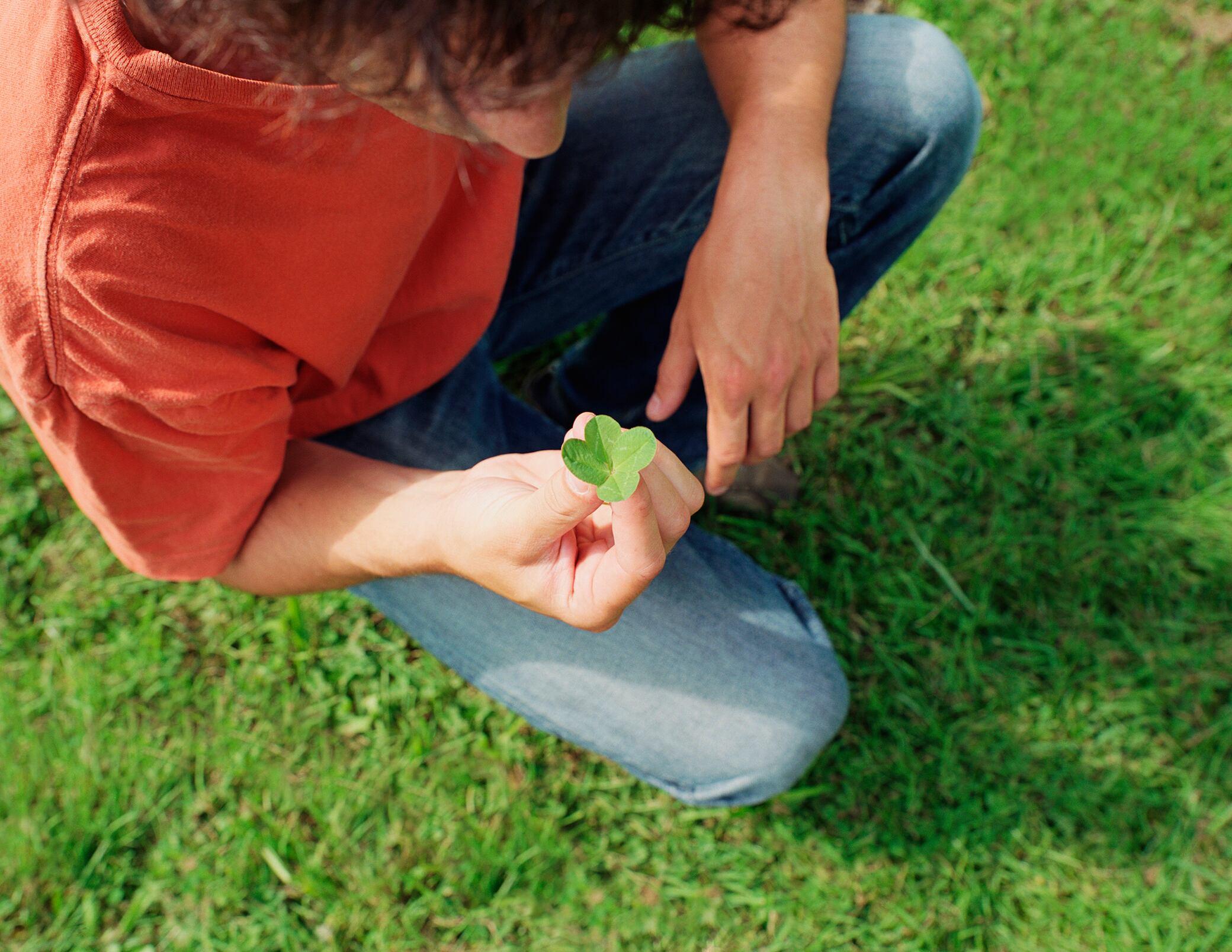 Klee Im Rasen Wie Man Das Unkraut Effektiv Loswird
