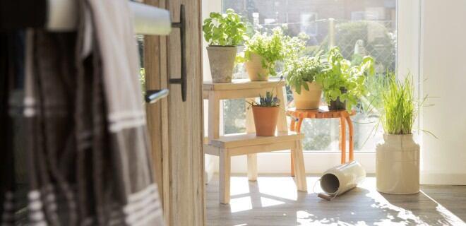 Indoor-Farming: Kräuterecke in der Küche