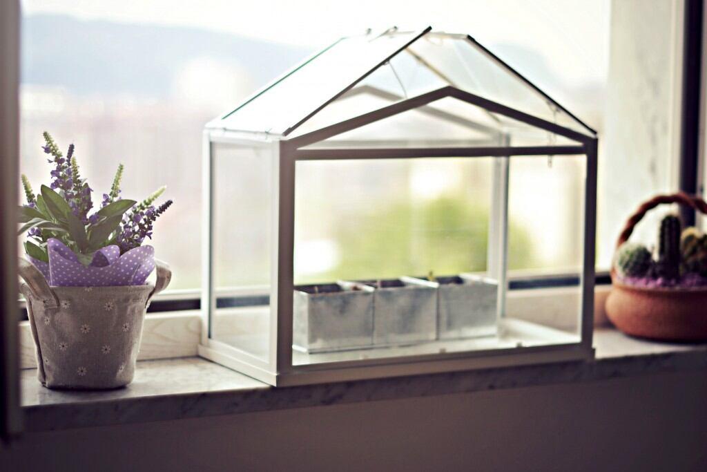 Indoor-Farming: Mini-Gewächshaus