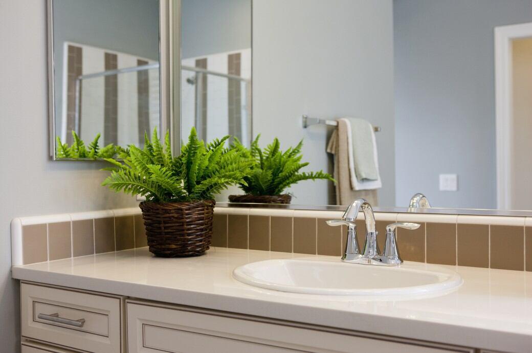 Die Perfekten Badezimmer-Pflanzen