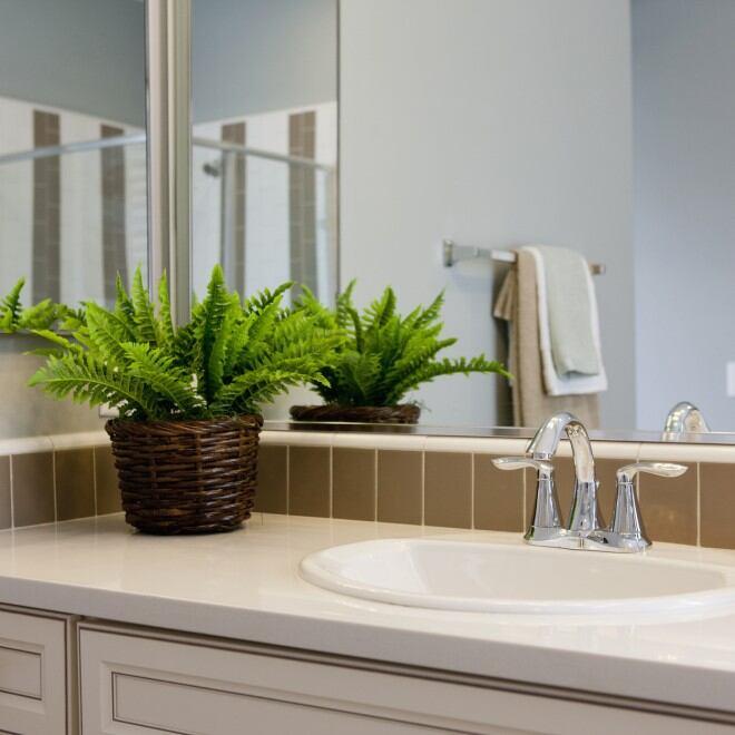 Welche Pflanze ist für das Badezimmer geeignet?