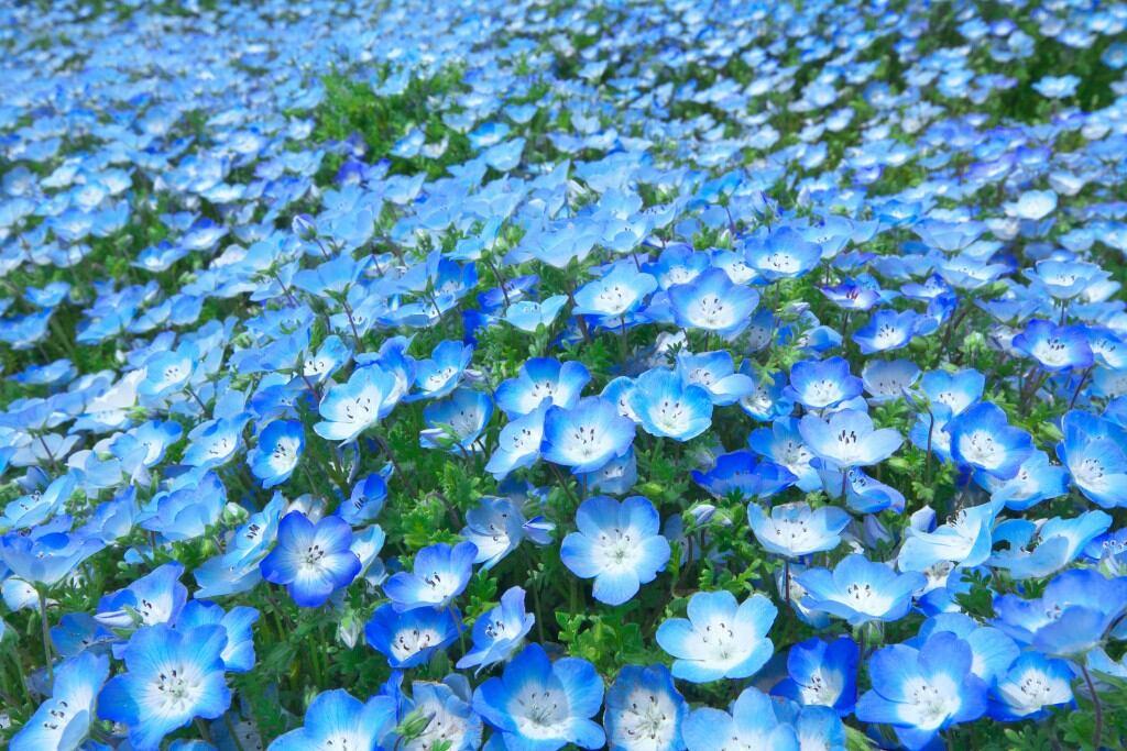 Blühende Schattenpflanzen: