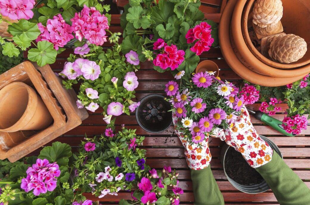 Garten im April: Blumen vorbereiten und einpflanzen