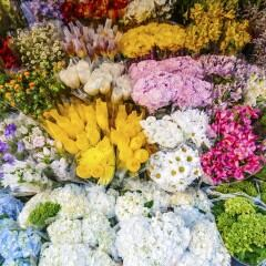 Verschiedene Blumenarten