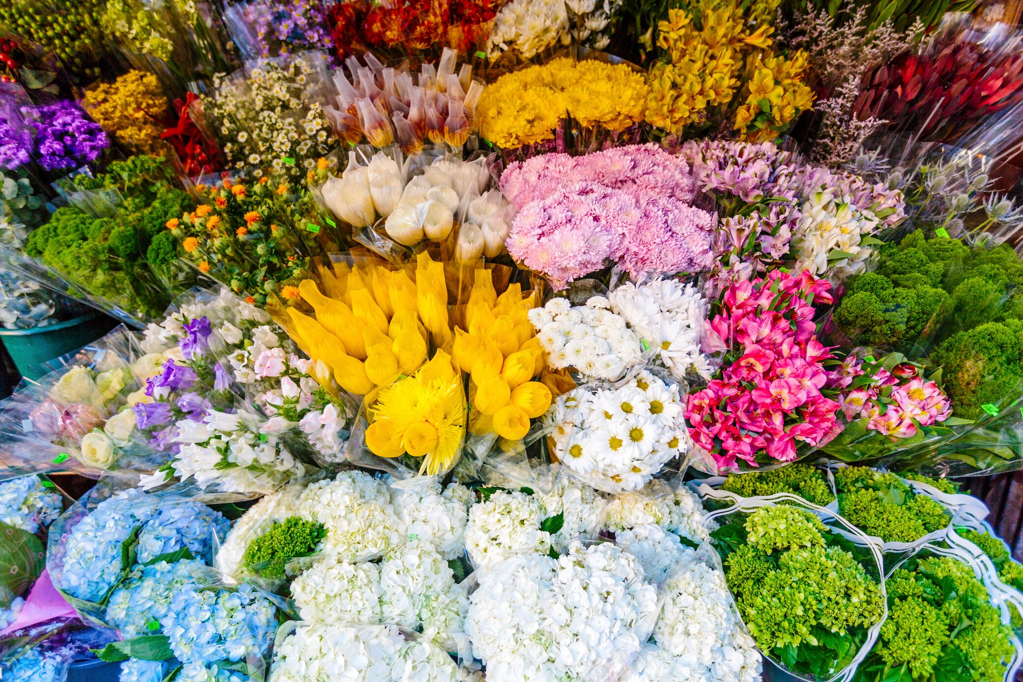 Wissen Sie, wie diese 12 Blumenarten üblicherweise heißen?