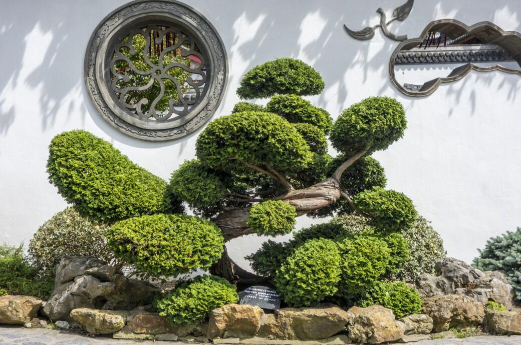 5 Immergrüne Bäume Für Den Garten Ohne Laubfall Myhomebook