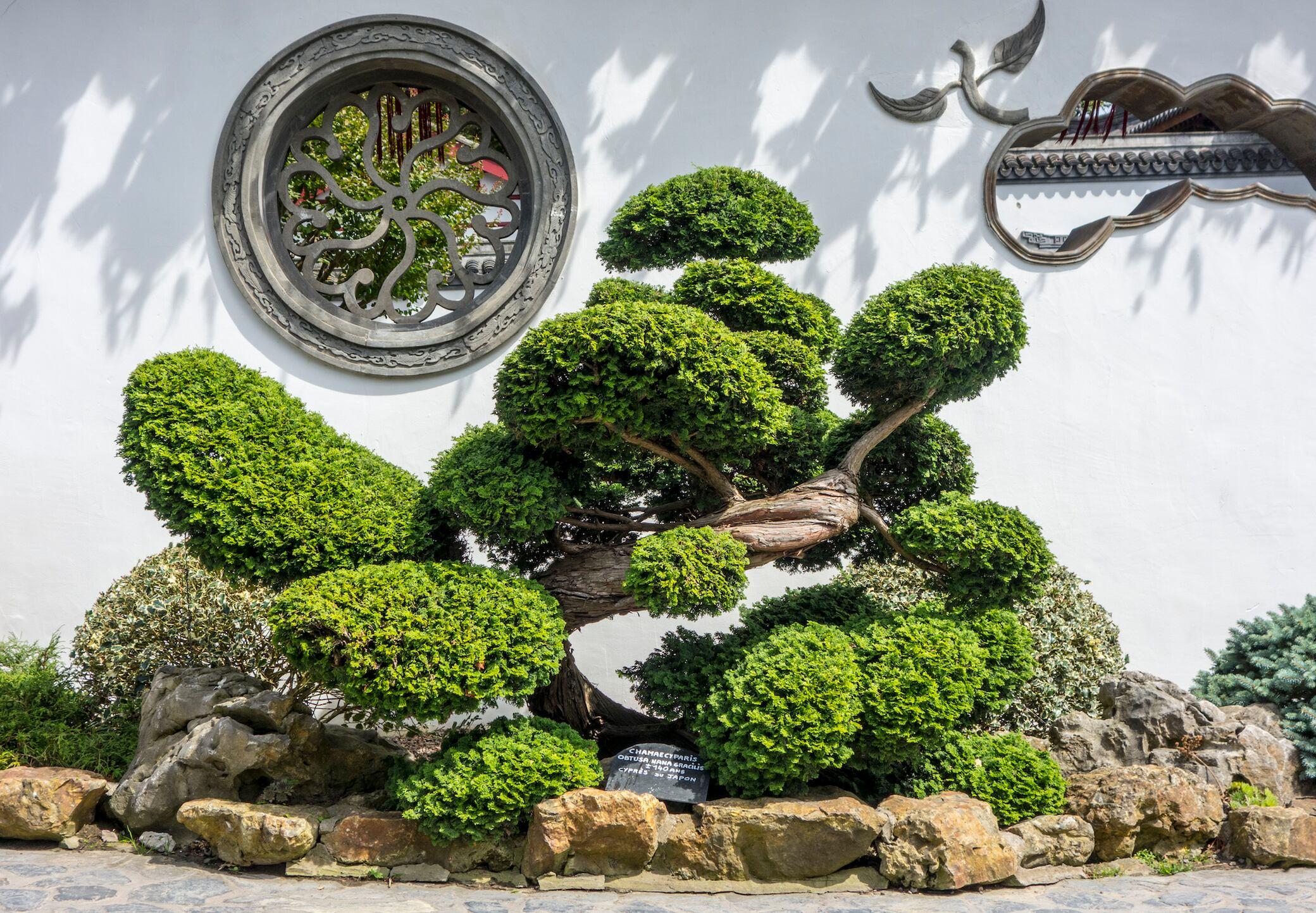 5 immergrüne Bäume für den Garten