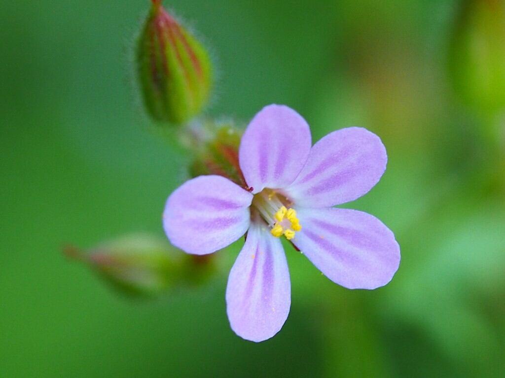 Schattenpflanzen 10 Bluhende Arten Fur Lichtarme Garten