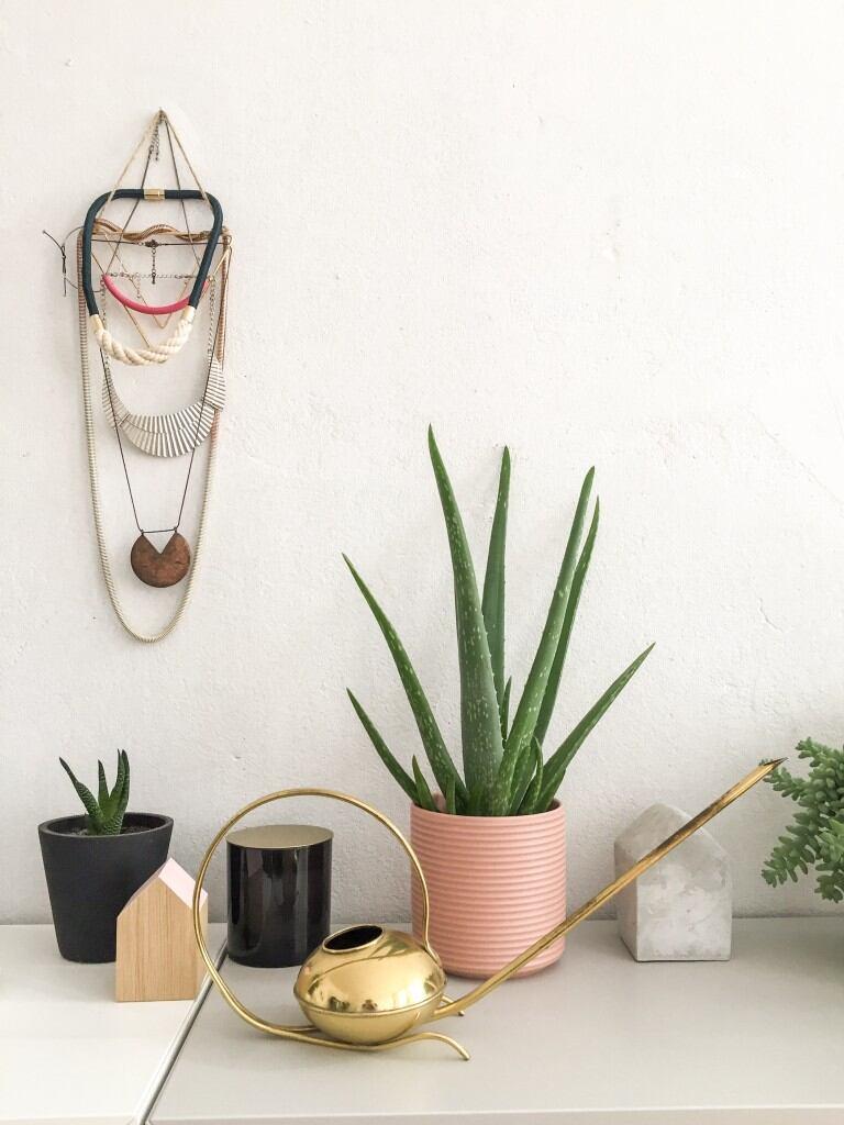 Pflegeleichte Zimmerpflanzen: Aloe Vera: