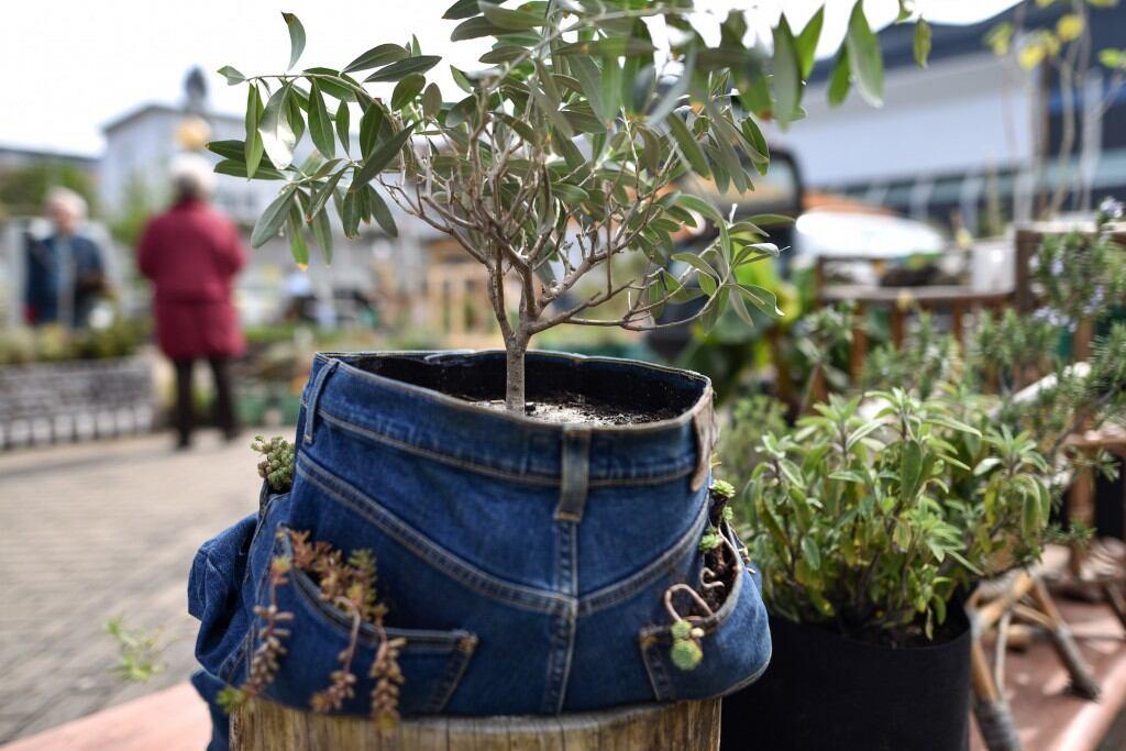 Jeans als Pflanzgefäß