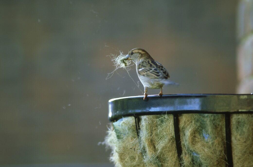 Mit Federn und Wolle polsten Vögel ihre Nester aus
