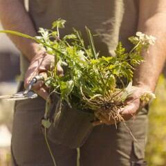 Unkrautvernichtung auf umweltschonende Art – diese Tipps helfen Hobbygärtnern