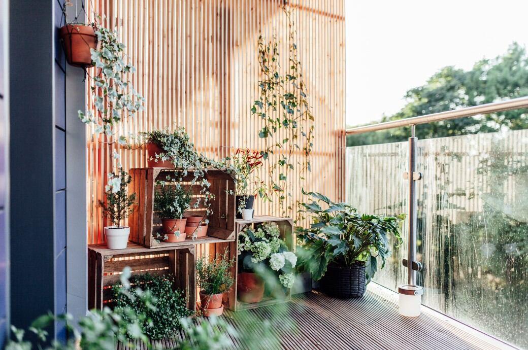 Sichtschutz und Pflanzen auf einem Balkon