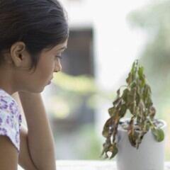 Pflanzen pflegen will gelernt sein