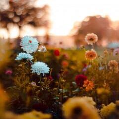 Auf Rasen im Garten eine Blühwiese anlegen – drei Methoden
