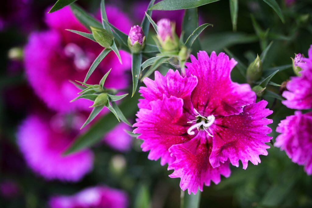10 Pflegeleichte Pflanzen Für Den Garten Myhomebook