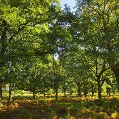 Ein Waldgebiet im Solling