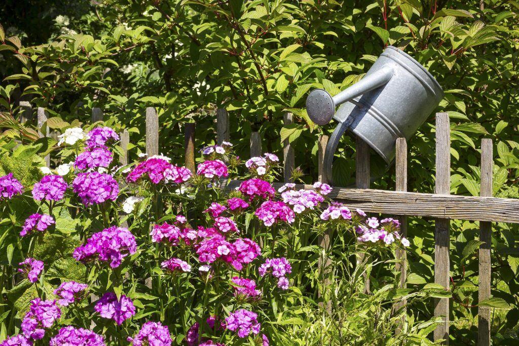 10 pflegeleichte pflanzen f r den garten myhomebook. Black Bedroom Furniture Sets. Home Design Ideas