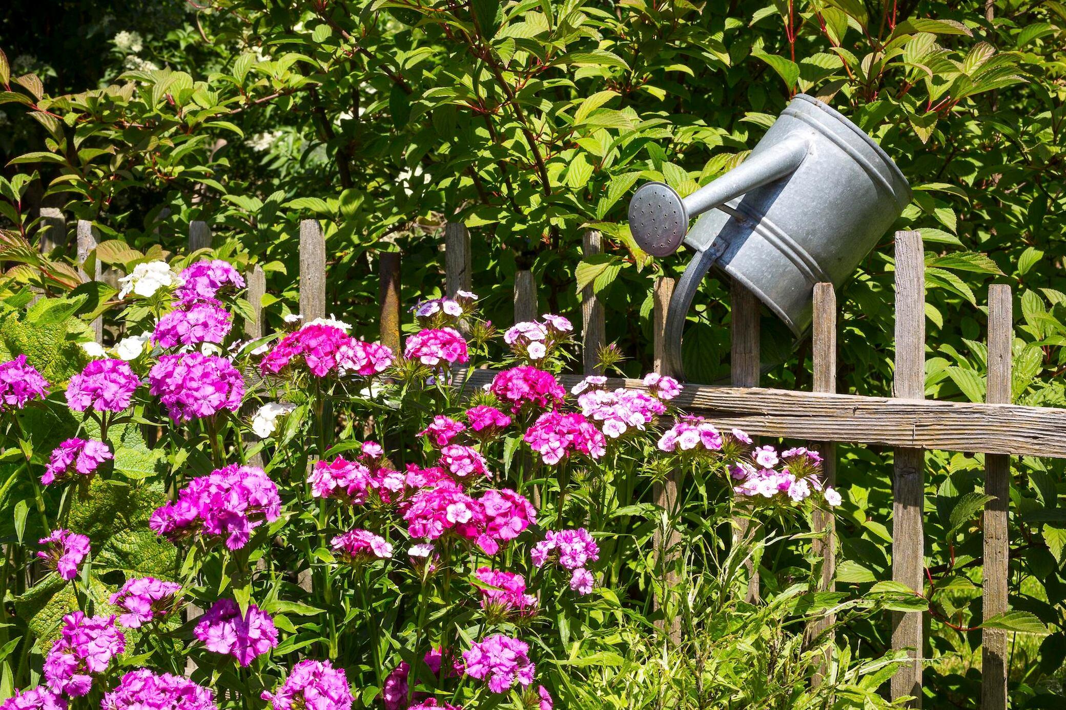 10 pflegeleichte Pflanzen für den Garten