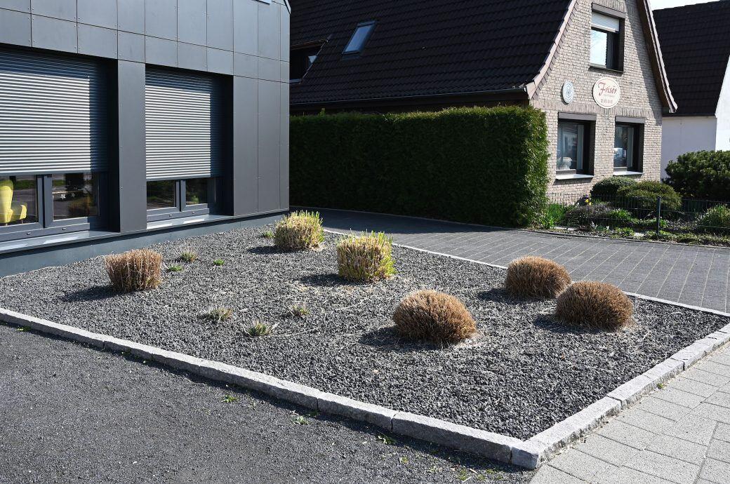 Schottergarten mit schwarzen Steinen und nicht heimischen Pflanzen