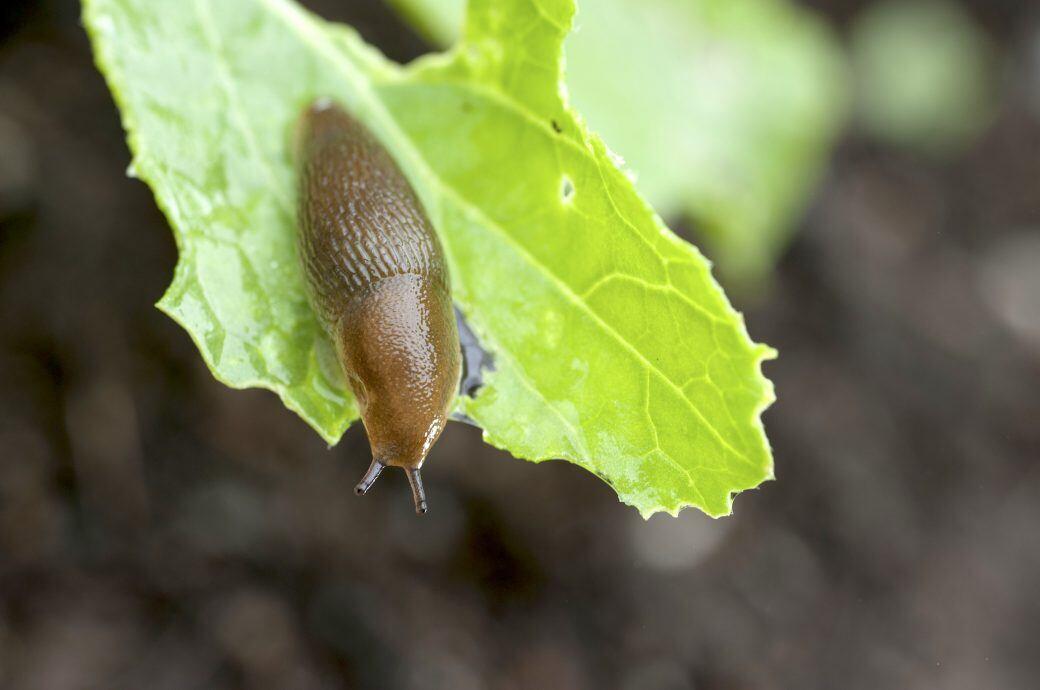 Schnecken Im Garten Ohne Gift Effektiv Vertreiben Myhomebook