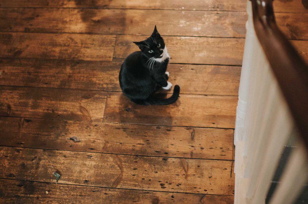 Die Katzenallergie eines Nachbarn kann nicht unbedingt zu einem Verbot führen