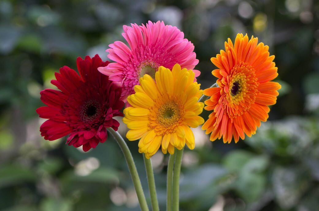 In Wohnung Und Garten: Diese Pflanzen Blühen Im April