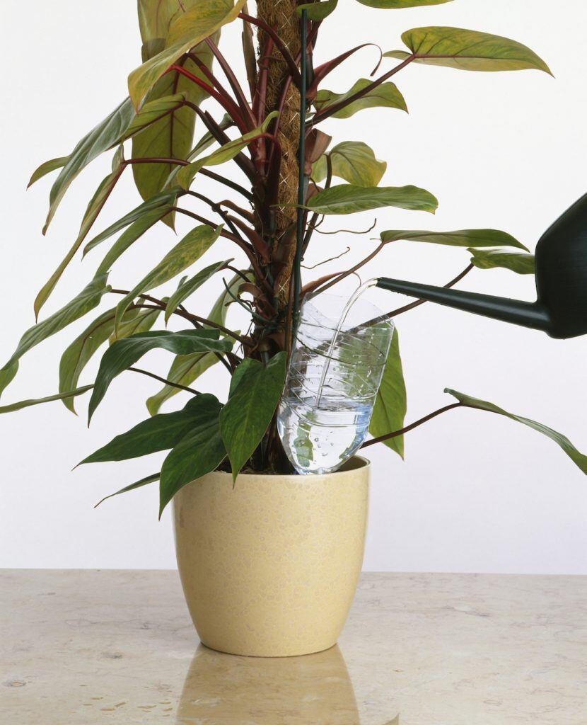 Pflanzenbewässerung im Urlaub