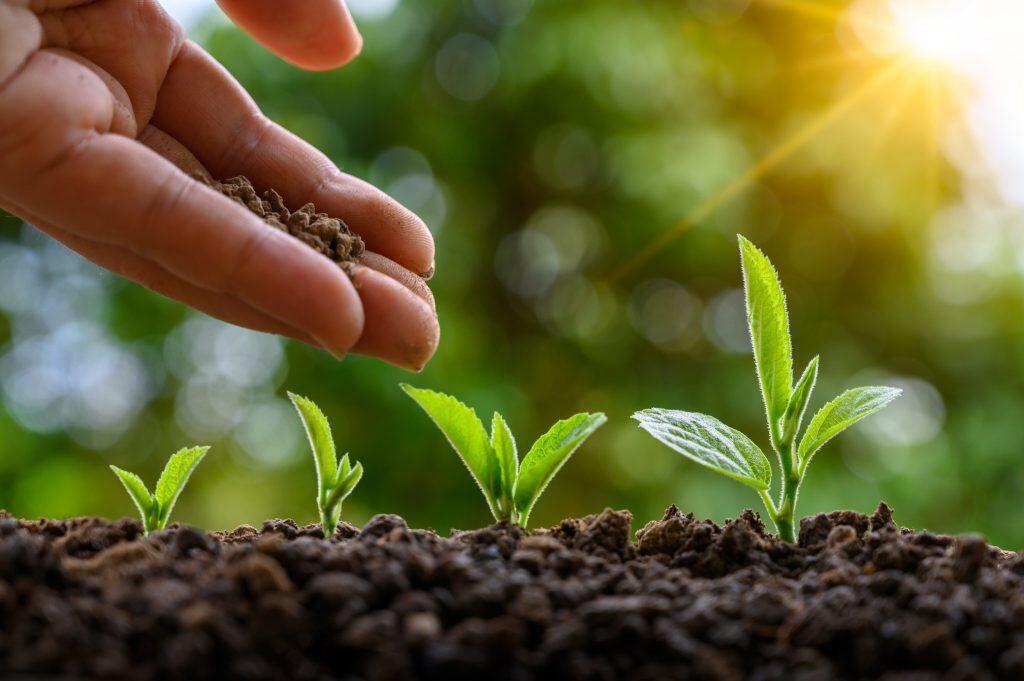 Je größer die Pflanze, desto mehr Dünger braucht sie