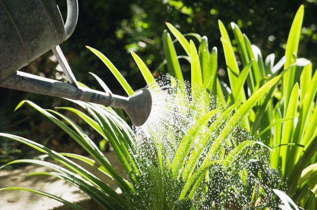 Zur Gartenarbeit im Juli gehört vor allem das Gießen. Am besten wässern Sie schon morgens