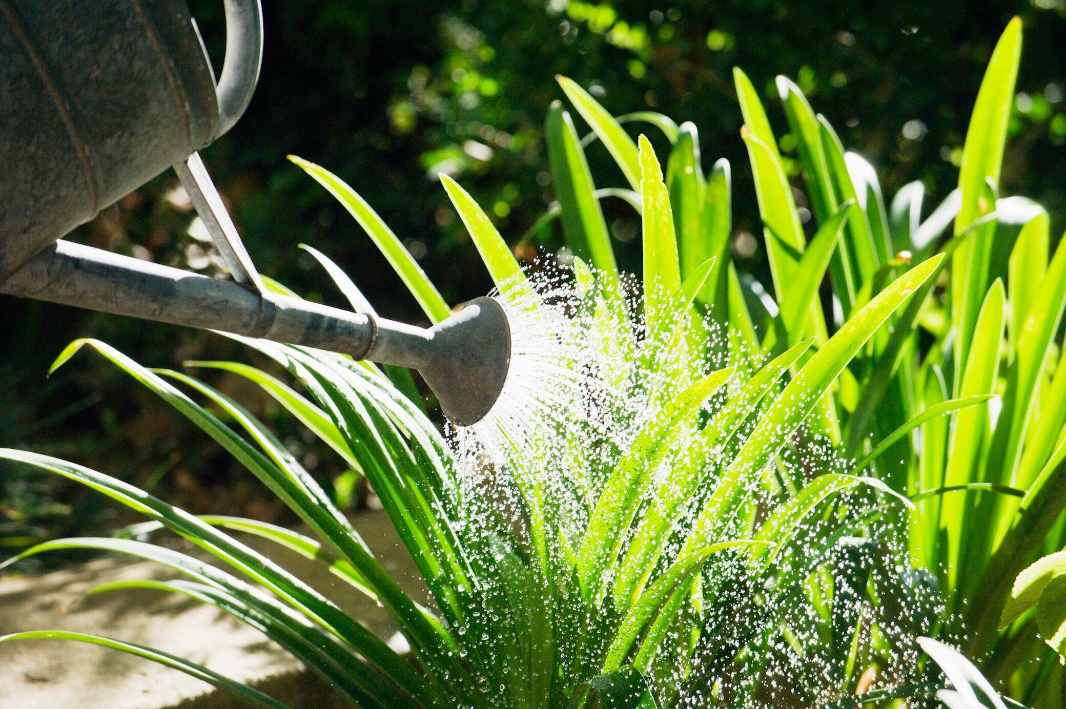 Wie Gartenpflanzen den Urlaub unbeschadet überstehen