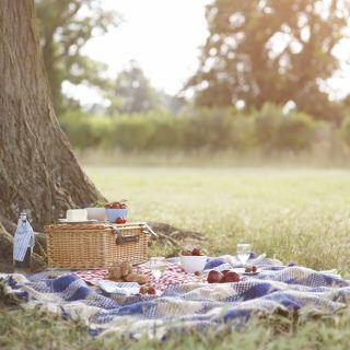 Ein Picknick schmeckt gleich doppelt gut ohne Fliegen