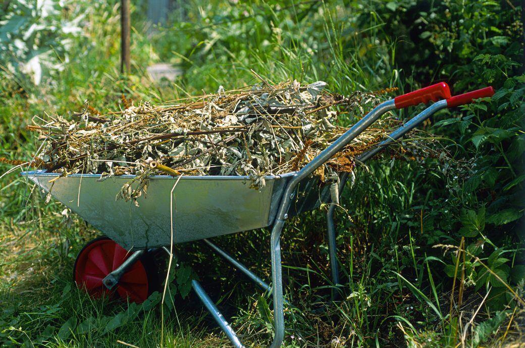 Gartenabfall sollte immer in der grünen Tonne entsorgt werden