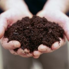 Hände voller Erde