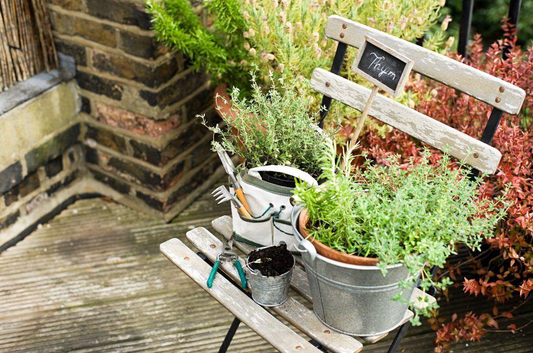 Heilkräuter aus dem Garten: Thymian