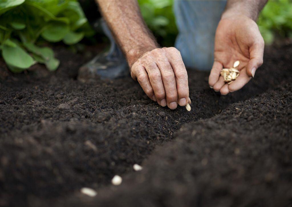 Gemüse säen im Mai
