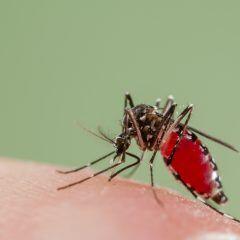 Mücken sind einfach eine Plage