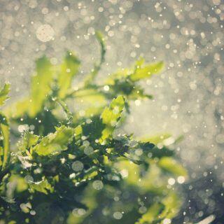 Gartenpflanzen mögen weiches Regenwasser