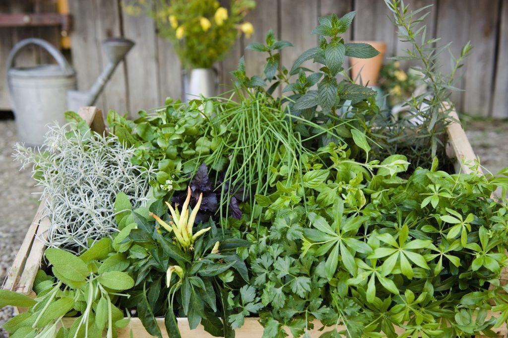 Eine Kiste ist mit verschiedenen Kräutern bestückt, fungiert ebenso als Mini-Kräutergarten.