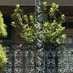 Blumenampeln müssen am Balkon gesichert hängen