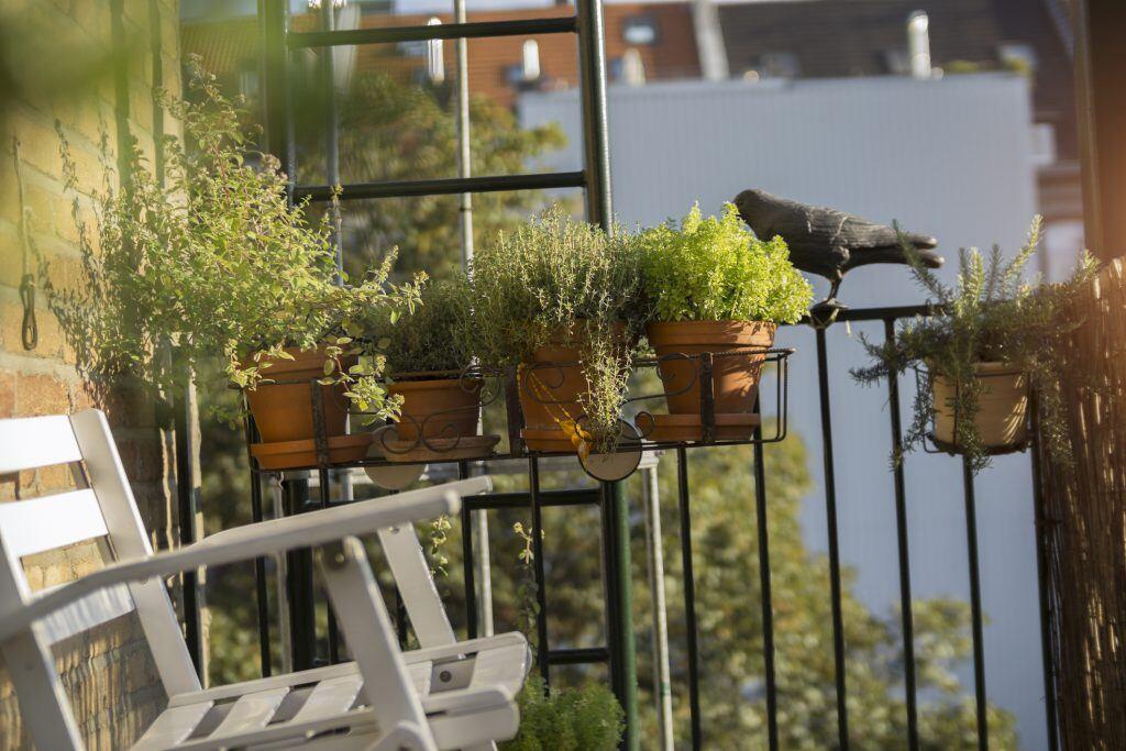 Kräuter können auf dem Balkon auch in Töpfen angepflanzt werden.